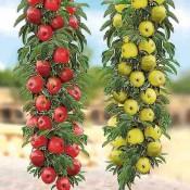 Dvostruko kalemljeno voće
