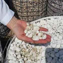 Kamen Beli Oblutak 1-2cm