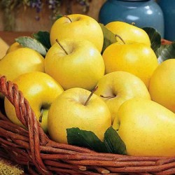 Jabuka Zlatni Delišeš
