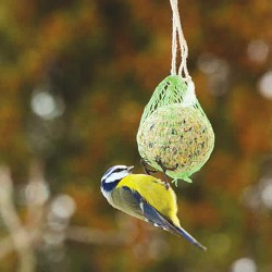 Masna kugla za ptice