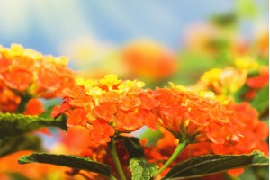 Letnje cvetnice i svetlost