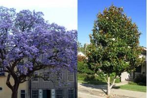 Osnovno o drveću i sve o dobroj sadnji