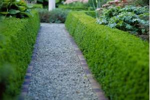 Žive ograde: Koju da odaberete, kako da sadite, orezujete?