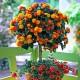 Razne letnje cvetnice